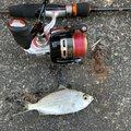 釣りキチさんの静岡県静岡市での釣果写真