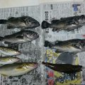 ちゅーだいさんの北海道帯広市での釣果写真