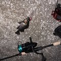 ロランさんの鳥取県での釣果写真