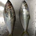 サイトさんの徳島県での釣果写真