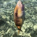 88diverさんの沖縄県での釣果写真