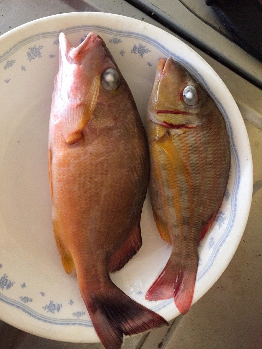 Louieさんの投稿画像,写っている魚はゴマフエダイ