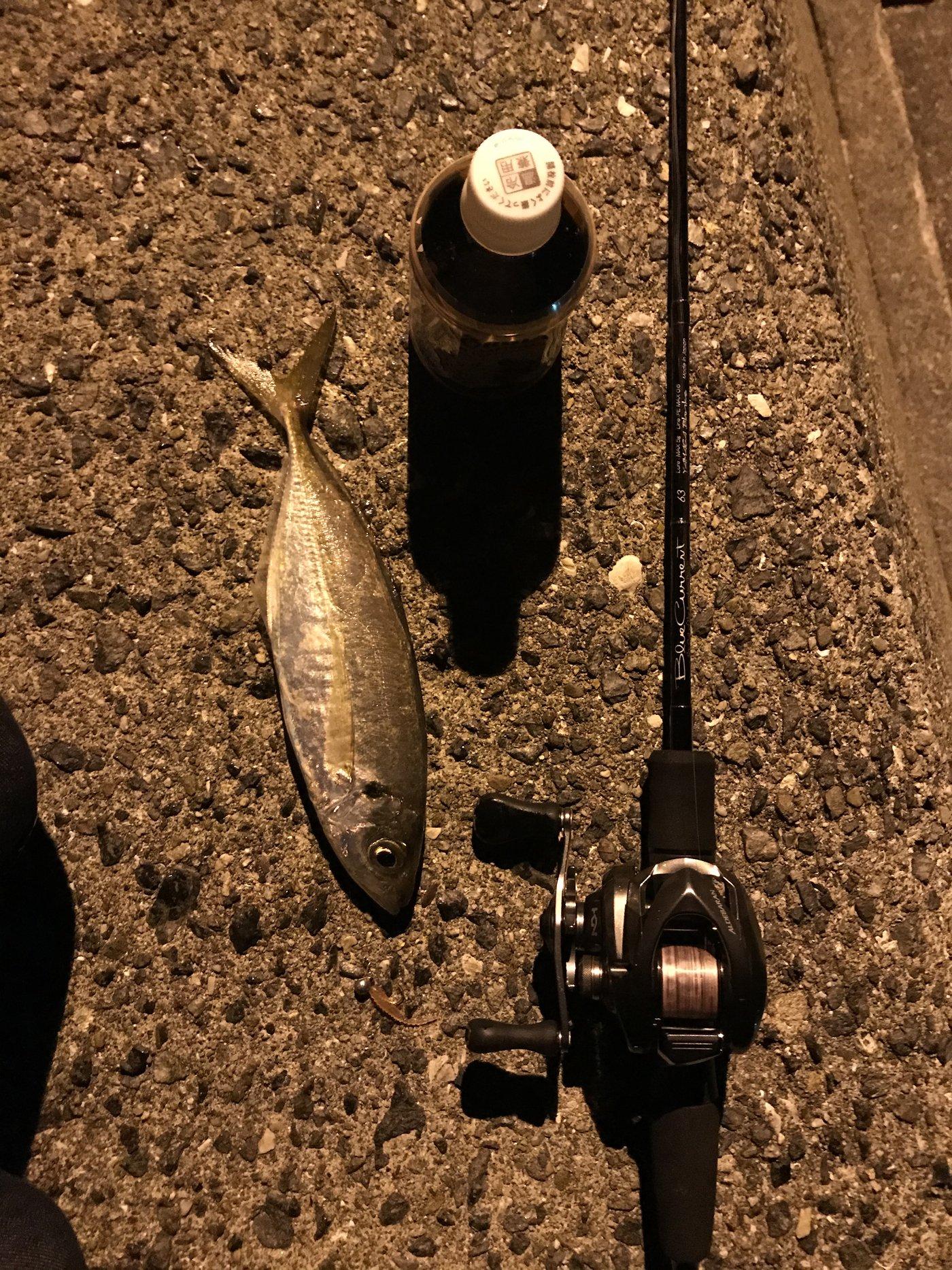 とぅうらさんの投稿画像,写っている魚はアジ