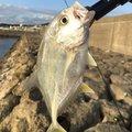 たまたまさんの沖縄県うるま市での釣果写真