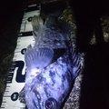 カチュアさんの青森県八戸市でのクロソイの釣果写真