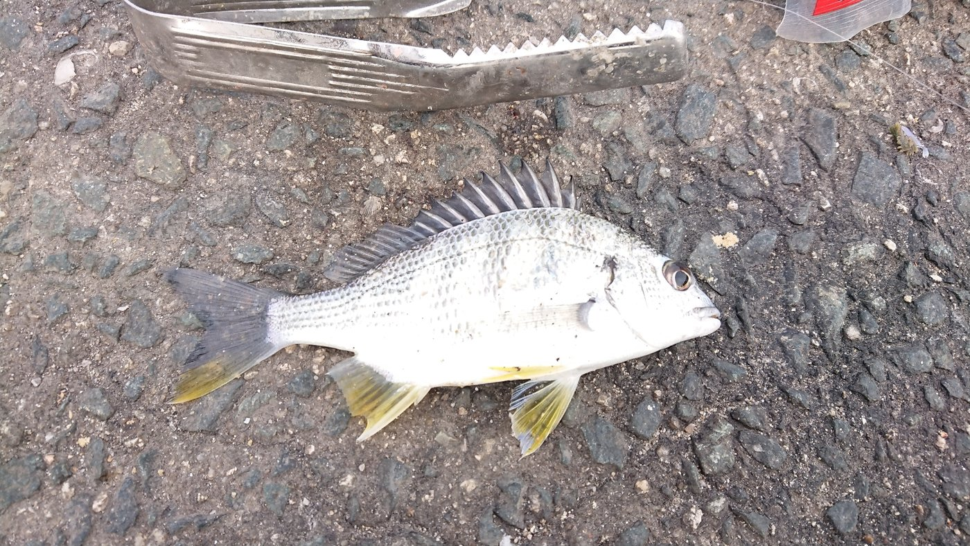 腱鞘炎さんの投稿画像,写っている魚は