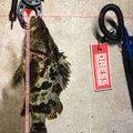 ( ¯−¯ )さんのタケノコメバルの釣果写真