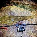 ハマちゃんさんの香川県での釣果写真