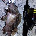 穴吹さんの香川県での釣果写真