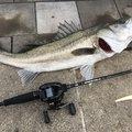 天才釣師(笑)さんの兵庫県での釣果写真
