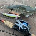 ととのすけさんの兵庫県での釣果写真