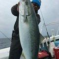 神戸太郎さんの兵庫県での釣果写真