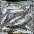 うんすいさんの兵庫県での釣果写真
