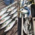 釣遊会さんの徳島県での釣果写真