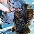 snufkin49さんの兵庫県での釣果写真