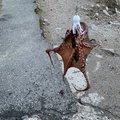 gameon97さんの新潟県北蒲原郡での釣果写真