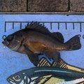 いも2018さんの徳島県での釣果写真