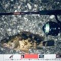 カメさんの長崎県南島原市での釣果写真