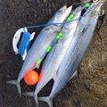 みさんの新潟県での釣果写真