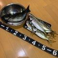 フィッシャーさんの神奈川県横浜市での釣果写真
