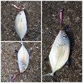 ソラさんの鹿児島県での釣果写真
