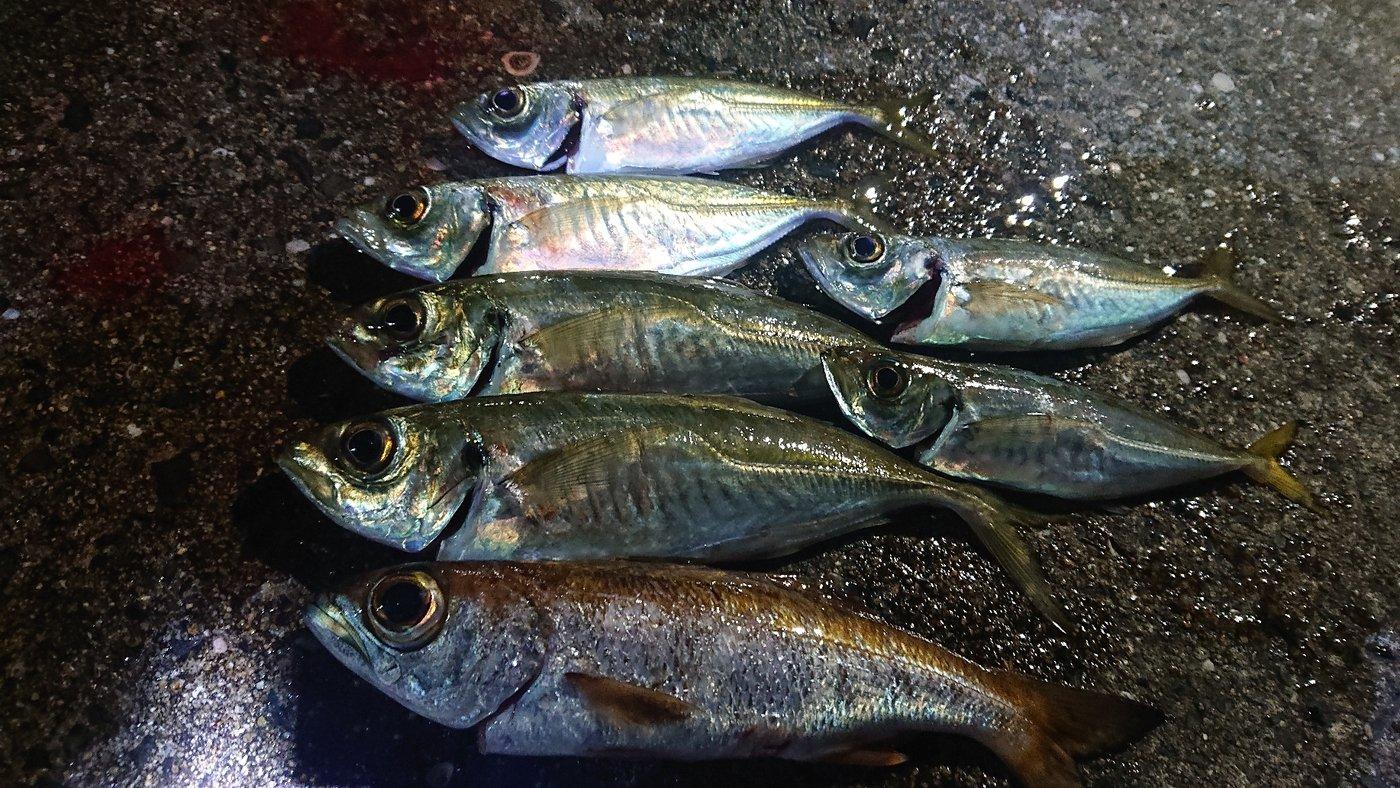 ピョンさんの投稿画像,写っている魚はアジ,ムツ