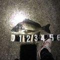 yshockさんの宮崎県での釣果写真
