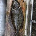 Fishingclubさんの佐賀県での釣果写真