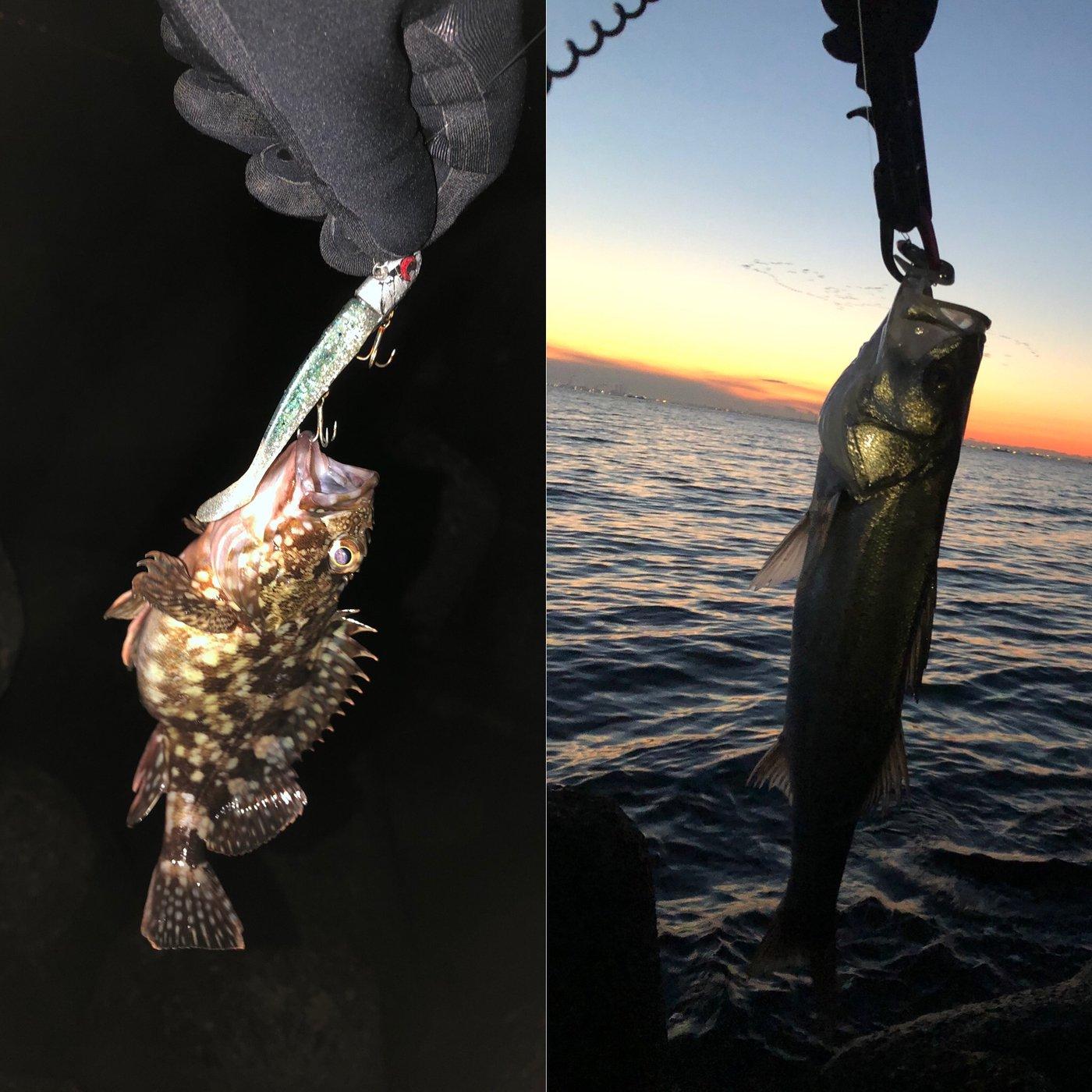 hi-ro!さんの投稿画像,写っている魚はスズキ,カサゴ