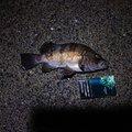 ゆきちさんの鹿児島県での釣果写真