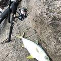 赤男さんの山口県での釣果写真