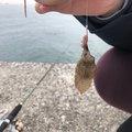 ヨシキさんの愛知県での釣果写真