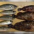 おりゅうさんの愛媛県での釣果写真
