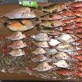 おさるさんさんの長崎県南島原市での釣果写真