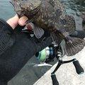 カメさんのカサゴの釣果写真