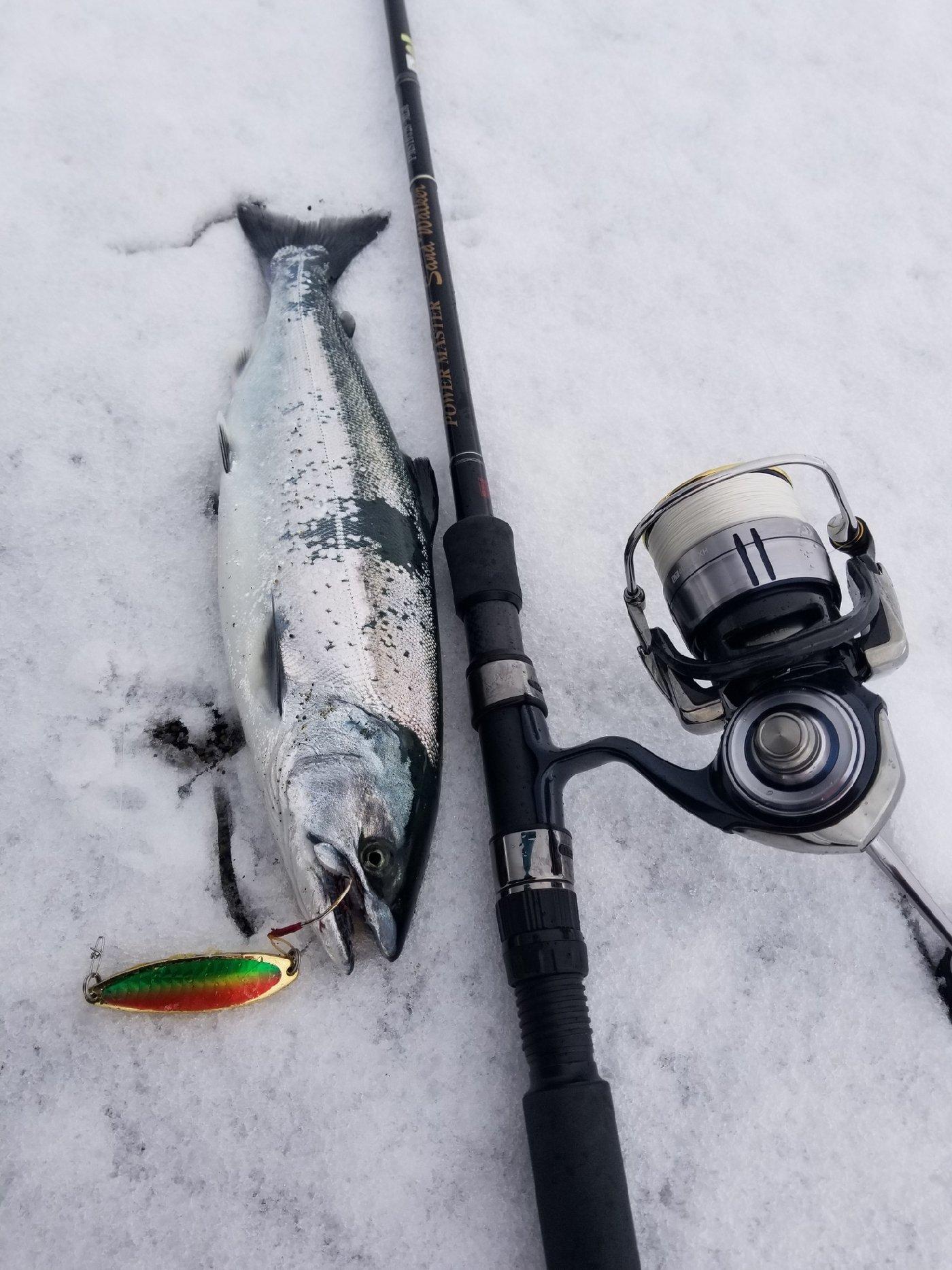 Yoshitakaさんの投稿画像,写っている魚は