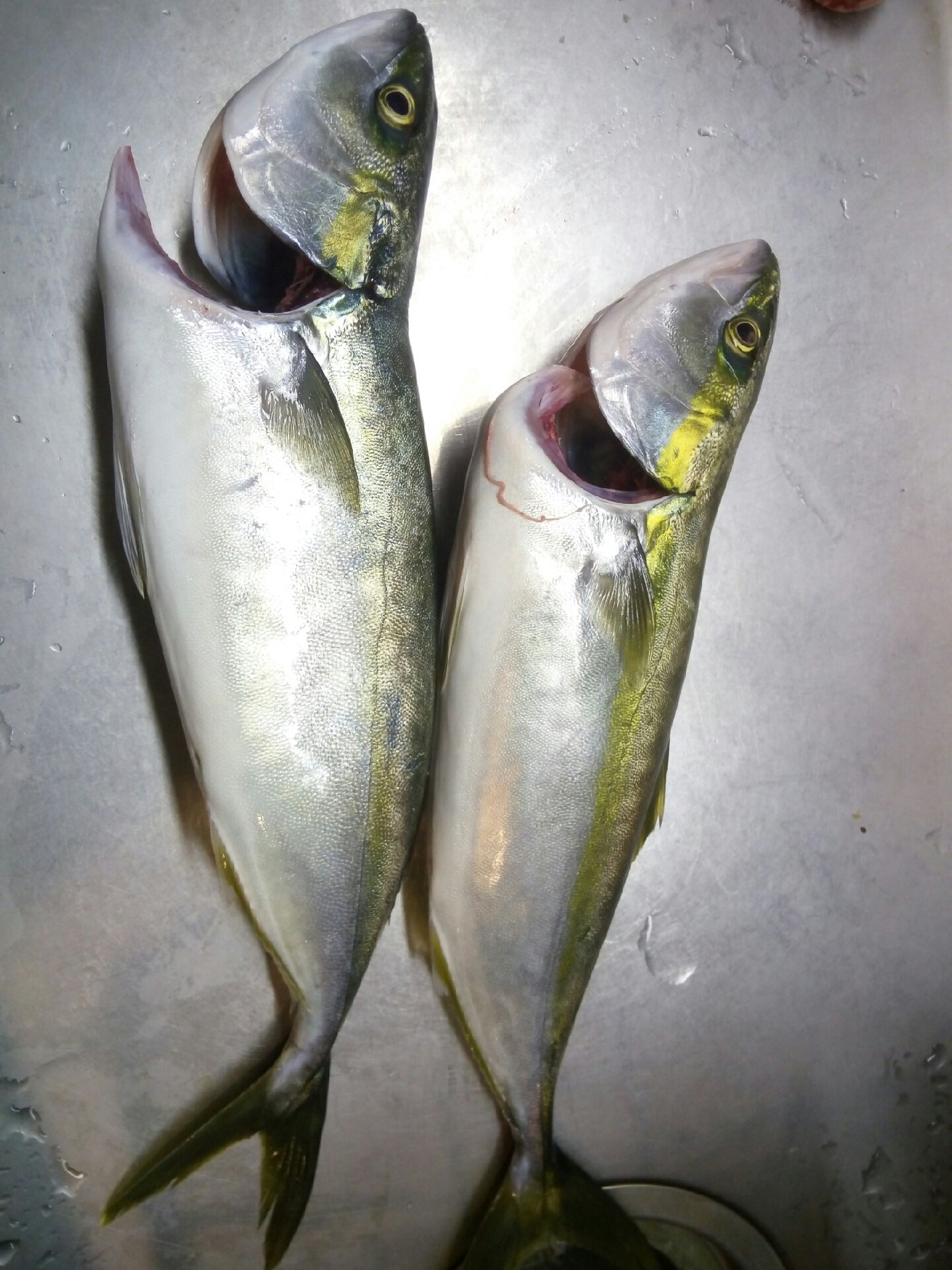 釣れたらいいなさんの投稿画像,写っている魚は