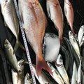 英信さんの鹿児島県での釣果写真