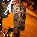 やまちゃんさんの青森県での釣果写真