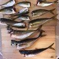 波那の慶治さんの大分県での釣果写真