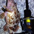 穴吹さんの香川県坂出市での釣果写真