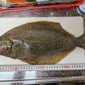 ハマちゃんさんの香川県坂出市での釣果写真