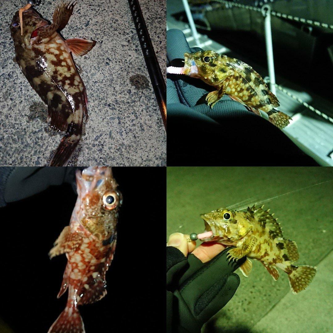tさんの投稿画像,写っている魚はカサゴ