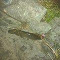ああとさんの和歌山県有田郡での釣果写真