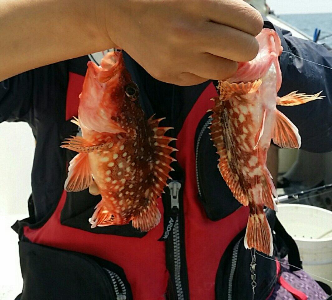ふかさんの投稿画像,写っている魚はカサゴ