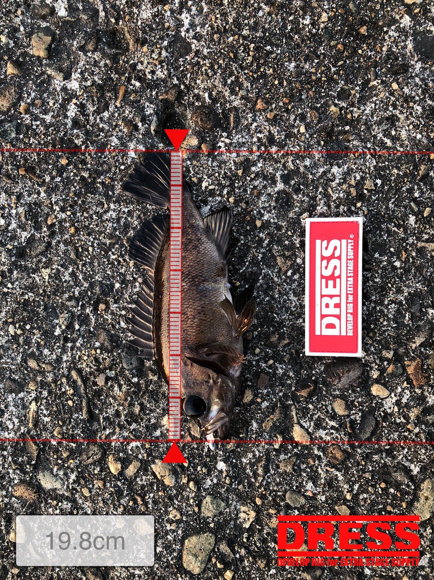 海猿さんの投稿画像,写っている魚はメバル