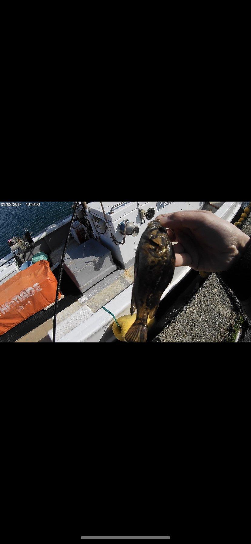 じぇーむすさんの投稿画像,写っている魚はクロソイ,ヒイラギ