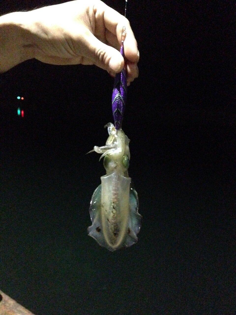 アラキさんの投稿画像,写っている魚はアオリイカ