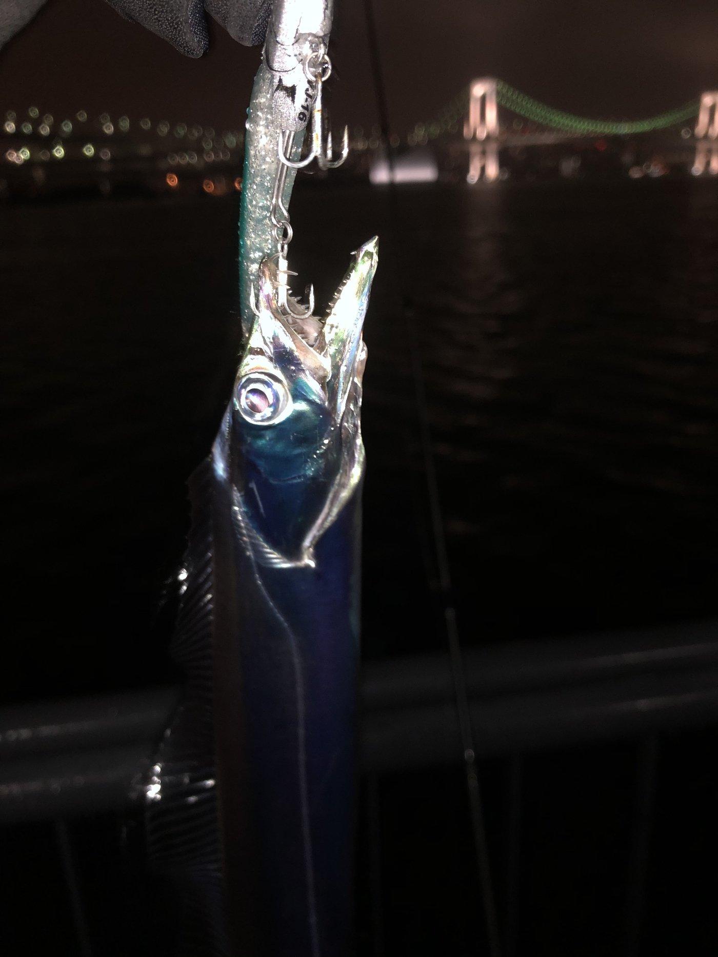 にく@マイスターさんの投稿画像,写っている魚はタチウオ,