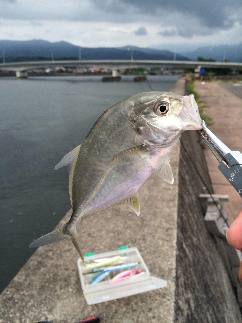 まつもんさんの投稿画像,写っている魚はギンガメアジ